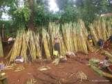 venditrice di canna da zucchero - sugar cane seller